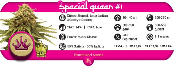 Special Queen Cannabis strain report