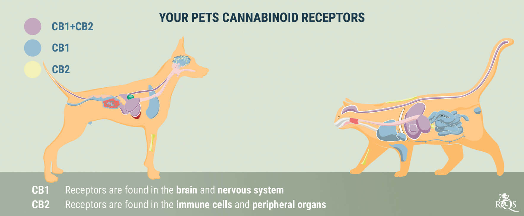 Medical Cannabis for Dogs and Cats