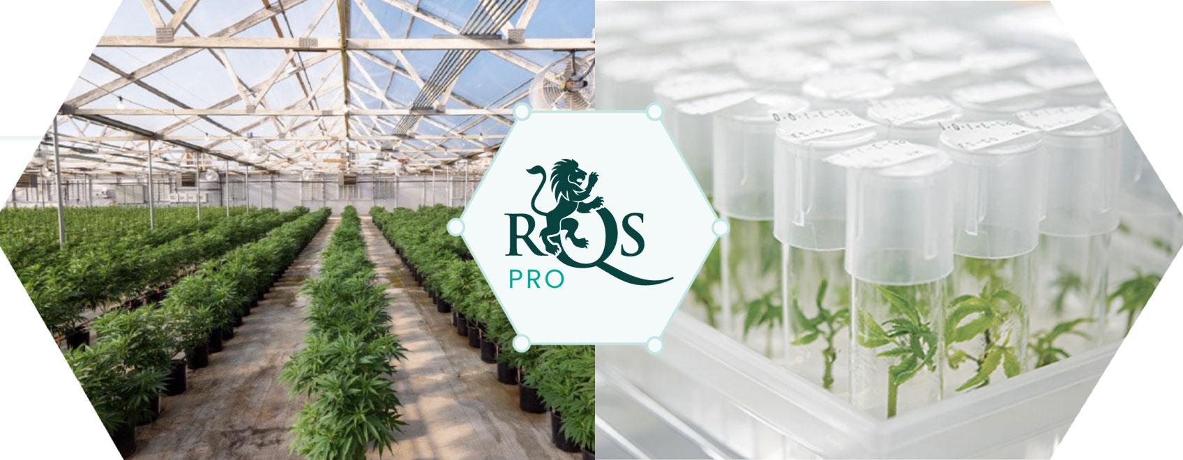 RQS Pro: liderant la innovació i el desenvolupament del cànnabis