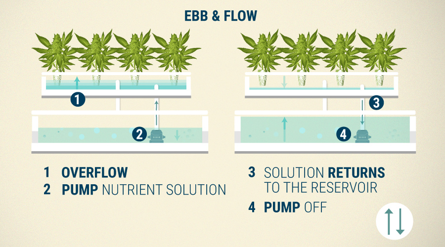 Ebb and Flow vs NFT