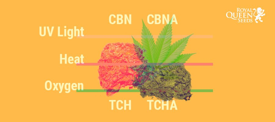 Why Does Cannabis Lose Its Potency Over Time?