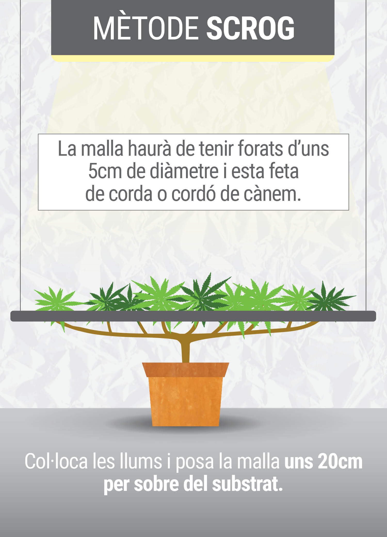 Cultivant cannabis amb el  mètodo SCROG (Screen of Green) Segunda Fase