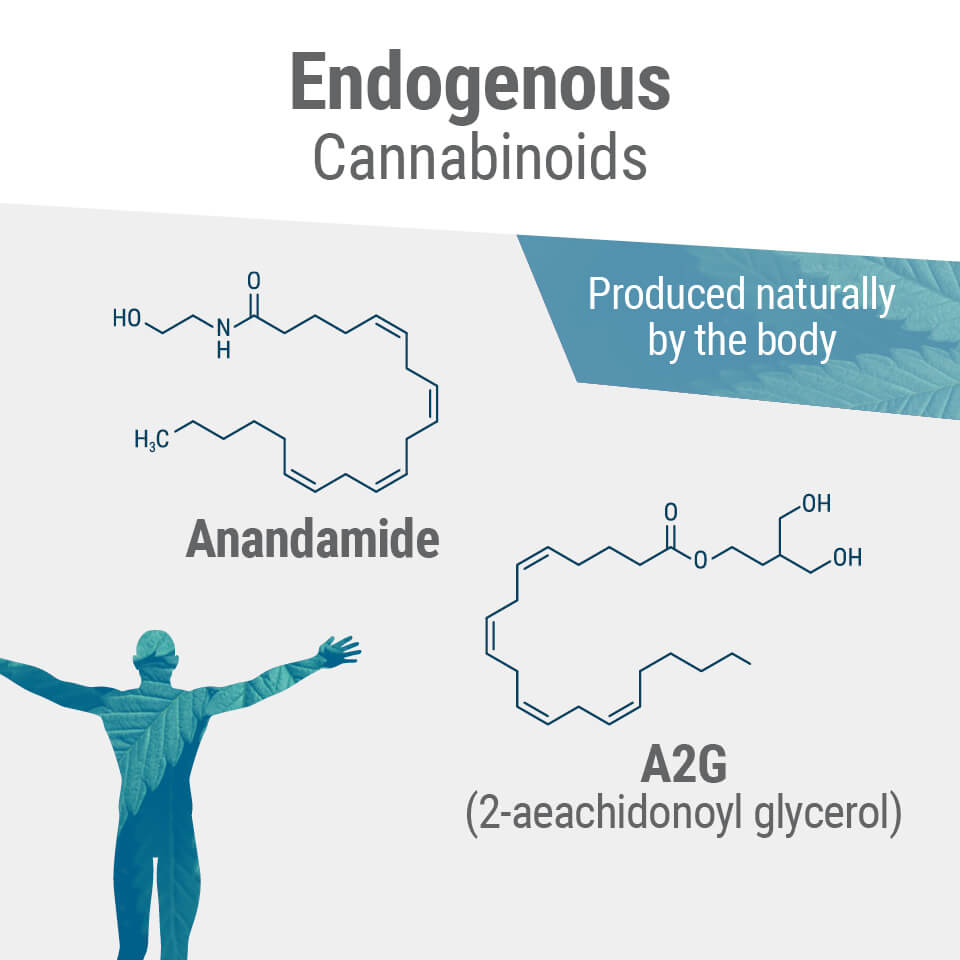 The Endogenous Cannabinoids