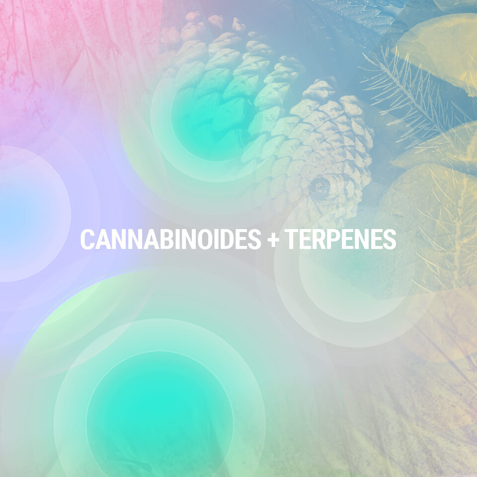 Understanding cannabis compounds