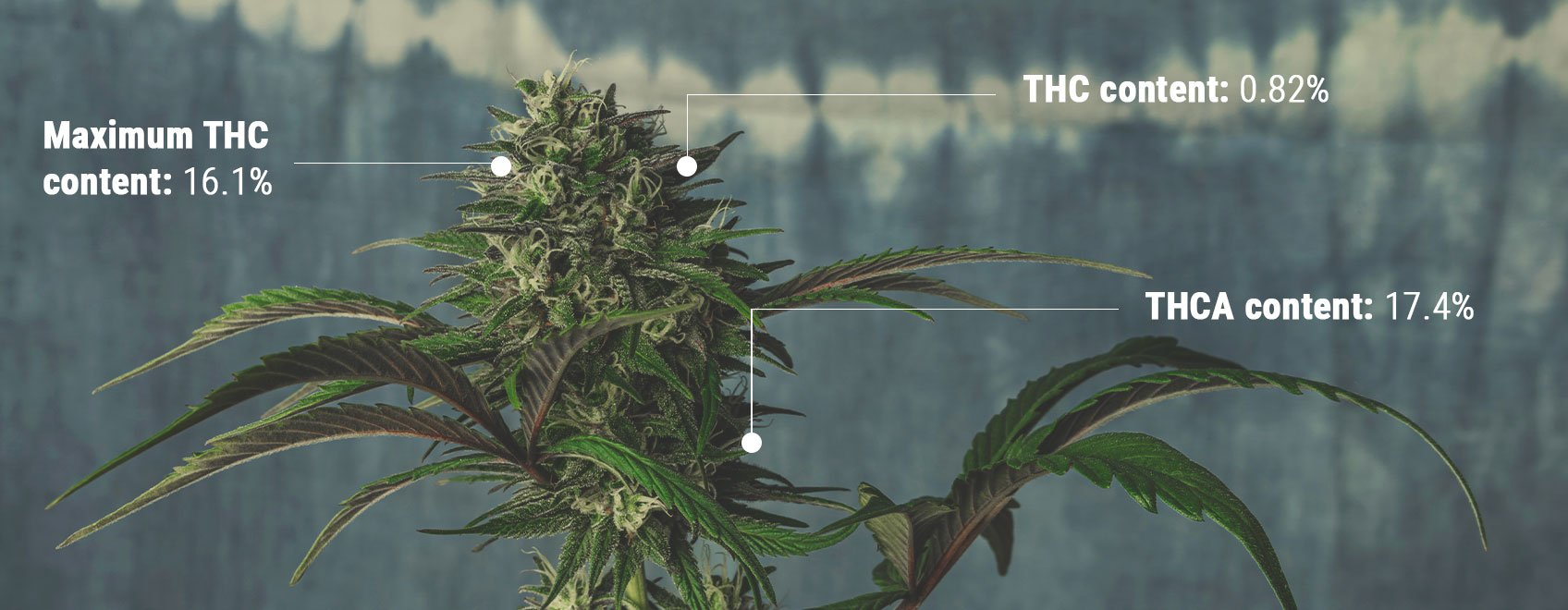Understanding the Science of THC Testing