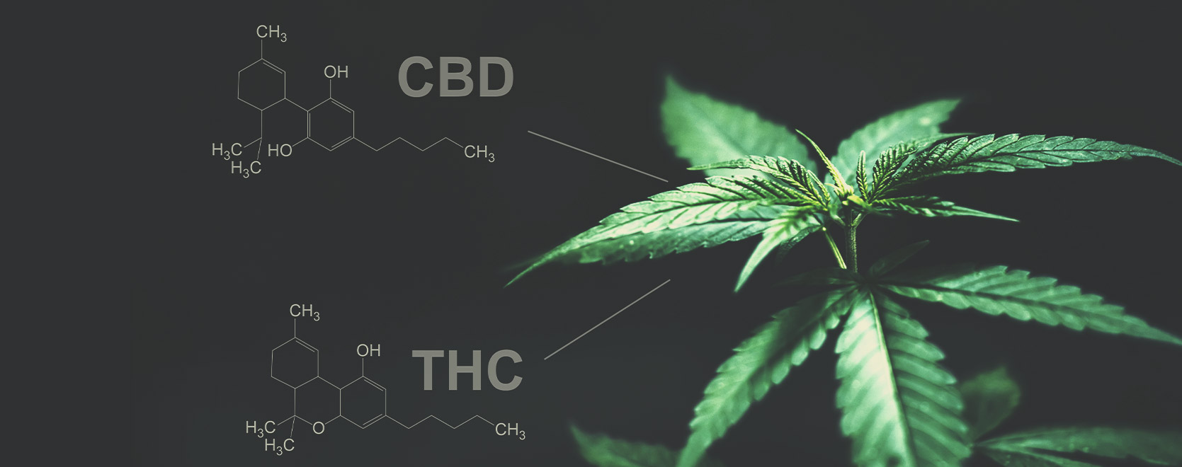 Is there any difference between THC and CBD in this regard?