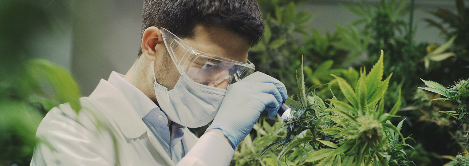 Cannabis Researchers Have Only Scratched the Surface