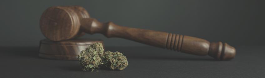 10 mites sobre la marihuana desmentits