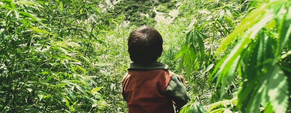 Does cannabis make a parent listless and low-energy, interfering with the focus needed to look after children?