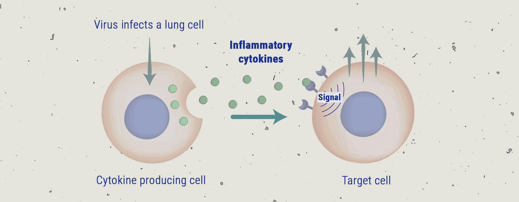 The Cytokine Storm