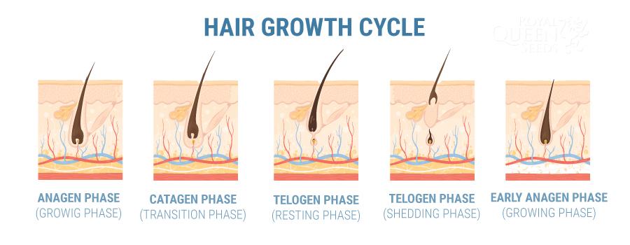 CAN CBD HELP WITH HAIR LOSS?