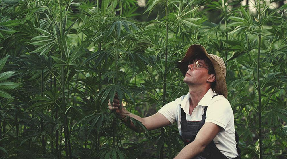 Hemp Cultivation Quality Standards