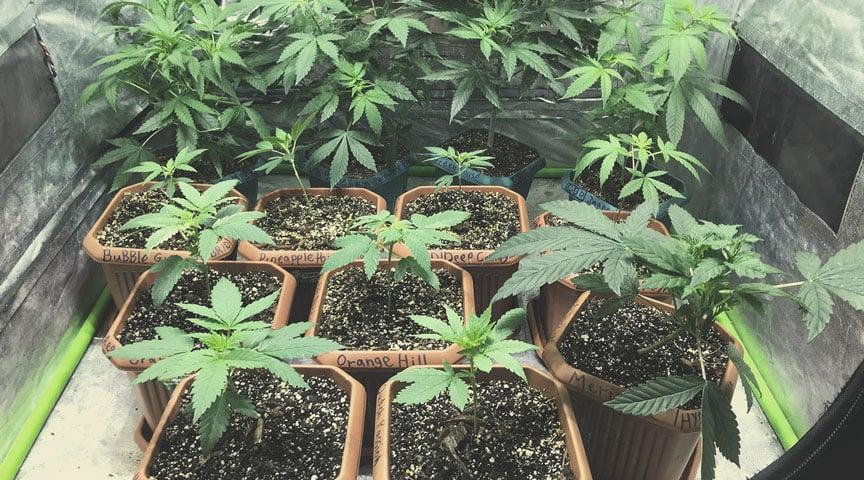 Growing Medical Marijuana: Equipment Rundown