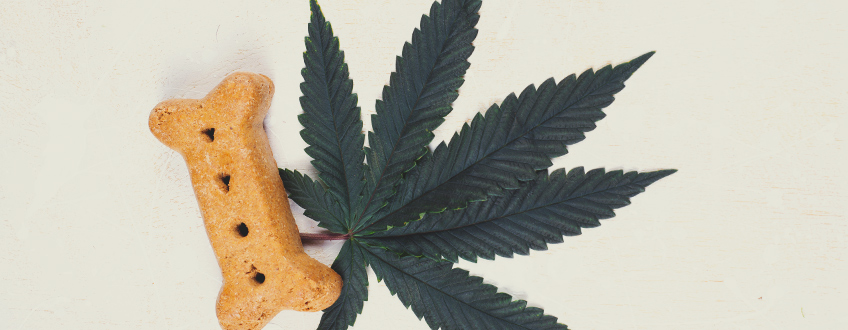 Cannabis and Dogs: The Effects of CBD in Dogs