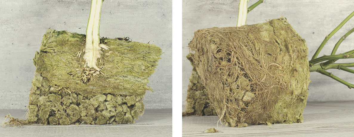 Can Rockwool Be Composted?