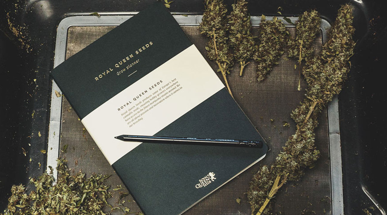 What To Record in a Cannabis Consumption Diary