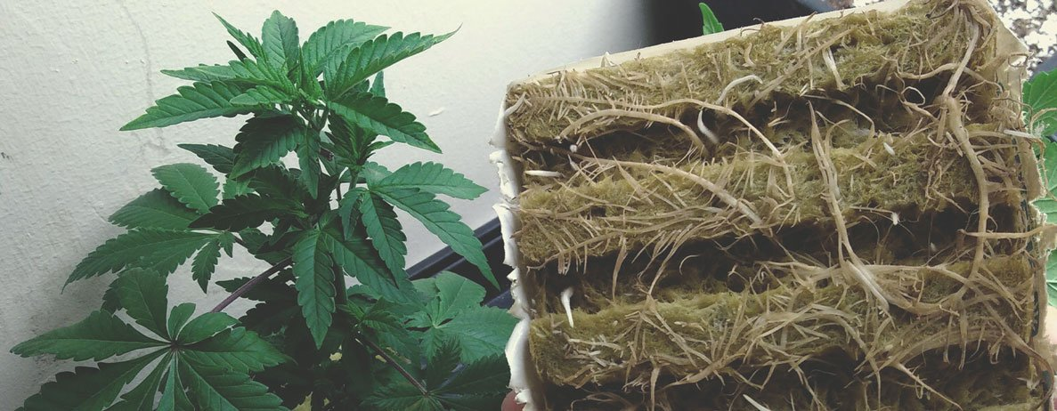 Rockwool For Hydroponic Marijuana Growing