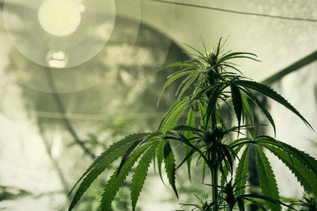 Le meilleur éclairage pour cultiver le cannabis - RQS Blog