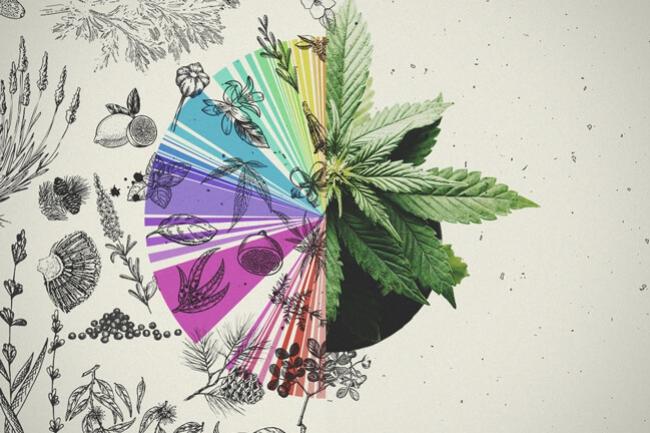 Benefits Of Cannabis Terpene Pinene - Royal Queen Seeds - RQS Blog
