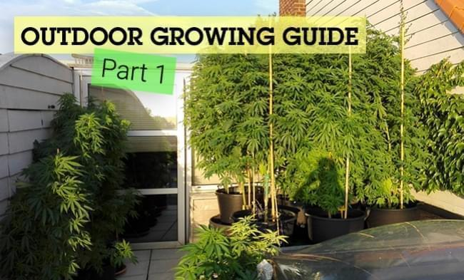 The Basics of Outdoor Growing (Part 1)