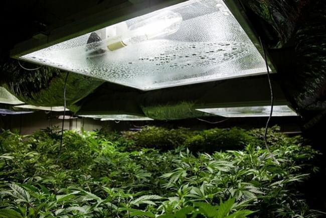 Culture du Cannabis en Intérieur : Humidité Relative et Températures ...