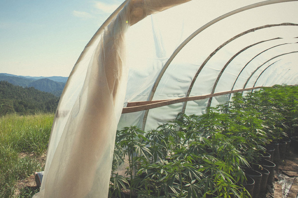 Peachy Why Are Greenhouses Becoming So Popular For Cannabis Growing Download Free Architecture Designs Ogrambritishbridgeorg