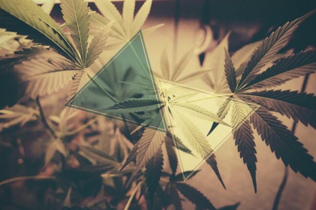 How CBD Counteracts THC - RQS Blog