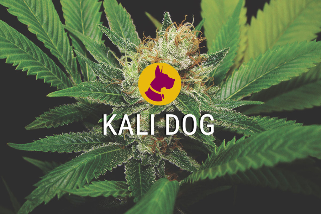 Kali gos un Reial ChemDawg