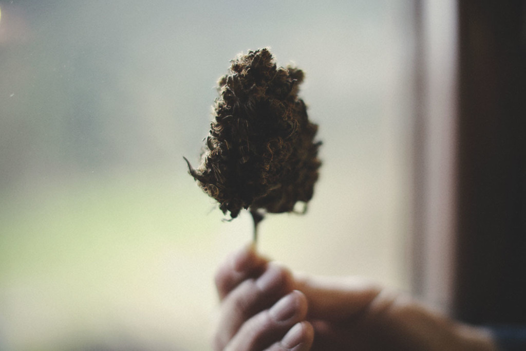 How To Differentiate Good From Bad Quality Marijuana Buds - RQS Blog