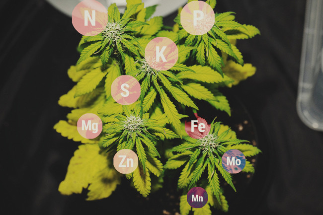Cannabis & Water Quality Part 2: PPM & EC - RQS Blog