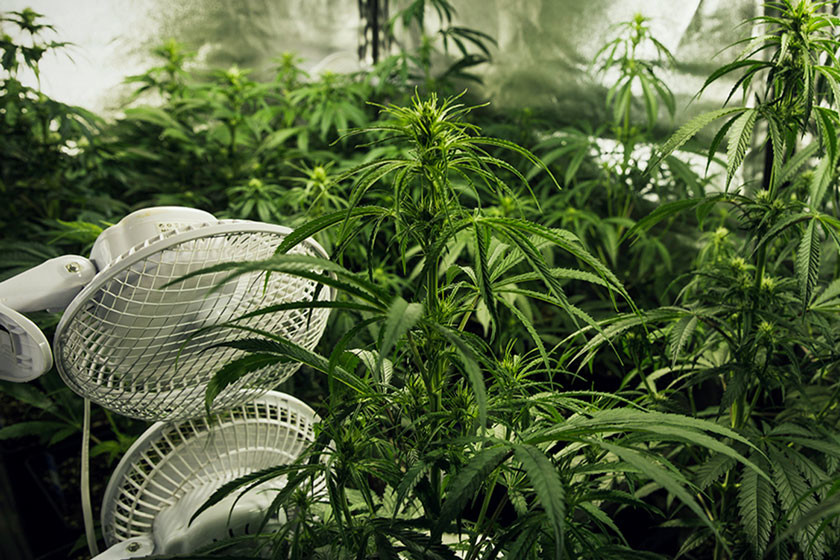 Building The Best Greenhouse For Marijuana - RQS Blog