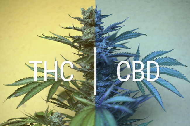 CBD Tinctures: Everything You Need To Know - RQS Blog