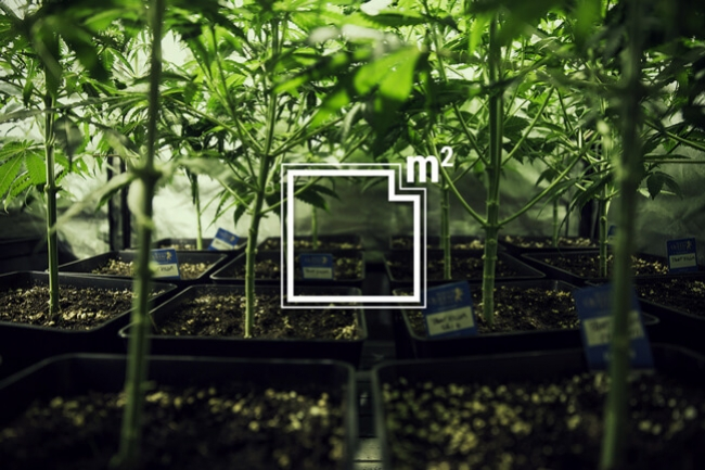 How Many Marijuana Plants To Grow Per Square Meter - RQS Blog