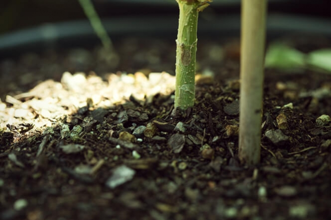 The Home Grower's Guide To The Best Soil For Cannabis - RQS Blog