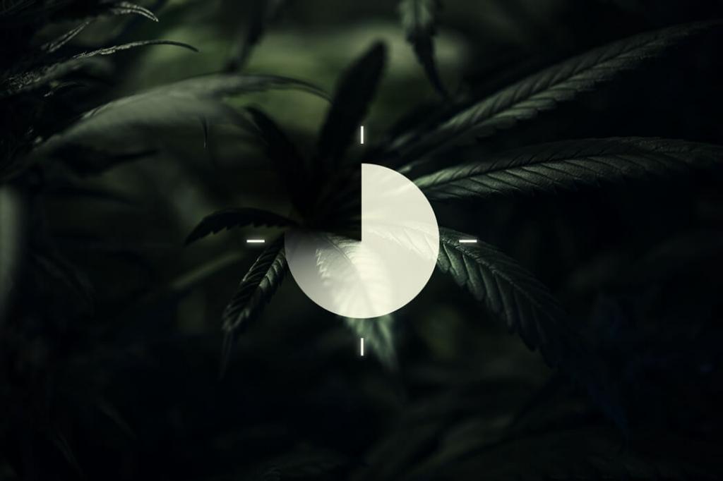 Cannabis Flowering Week By Week The Guide By Royal Queen Seeds